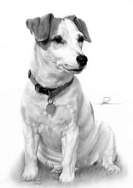 jack russell drawings jack russell puppy pencil drawing art print a4 only signed drawings russell jack