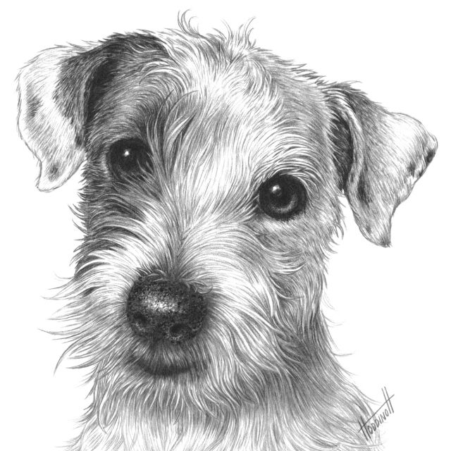 jack russell drawings jack russell terrier sold prints starting at 15 drawings russell jack