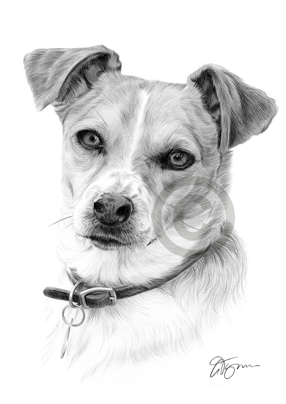 jack russell drawings pencil drawing of jack russell pencil sketch portraits russell drawings jack