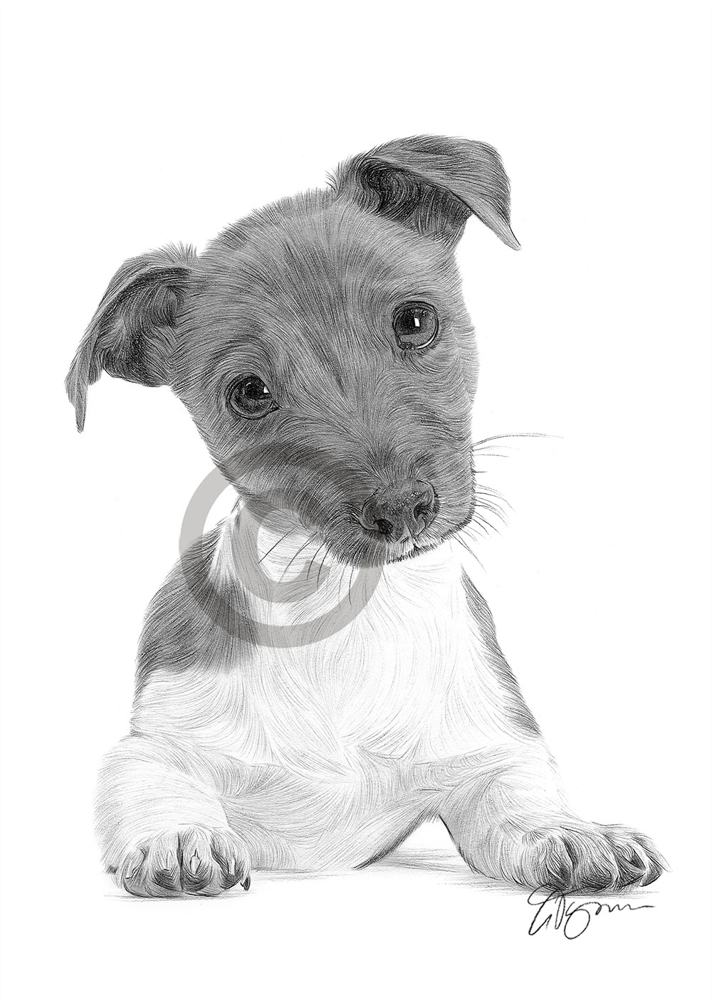 jack russell drawings realistic drawing terrier puppy google search in 2019 russell jack drawings