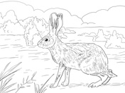 jackfruit coloring hares coloring pages free coloring pages jackfruit coloring