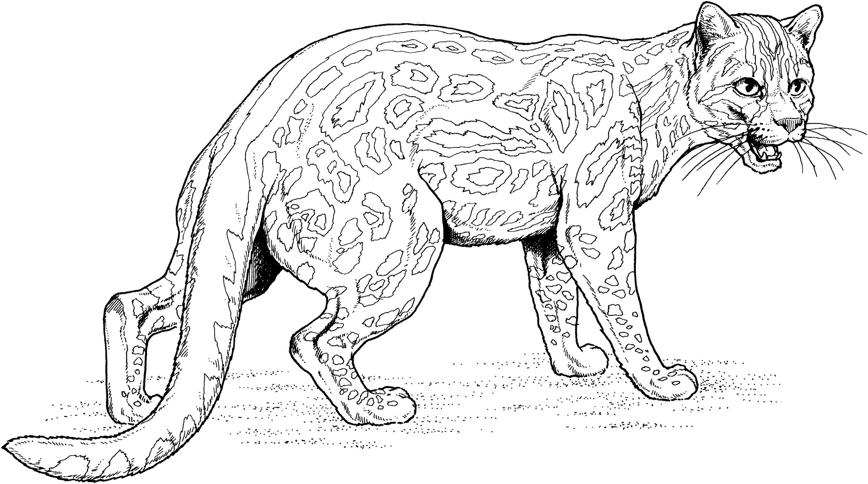 jaguar pictures to color coloring pages of jaguars printable bowstomatch color pictures jaguar to