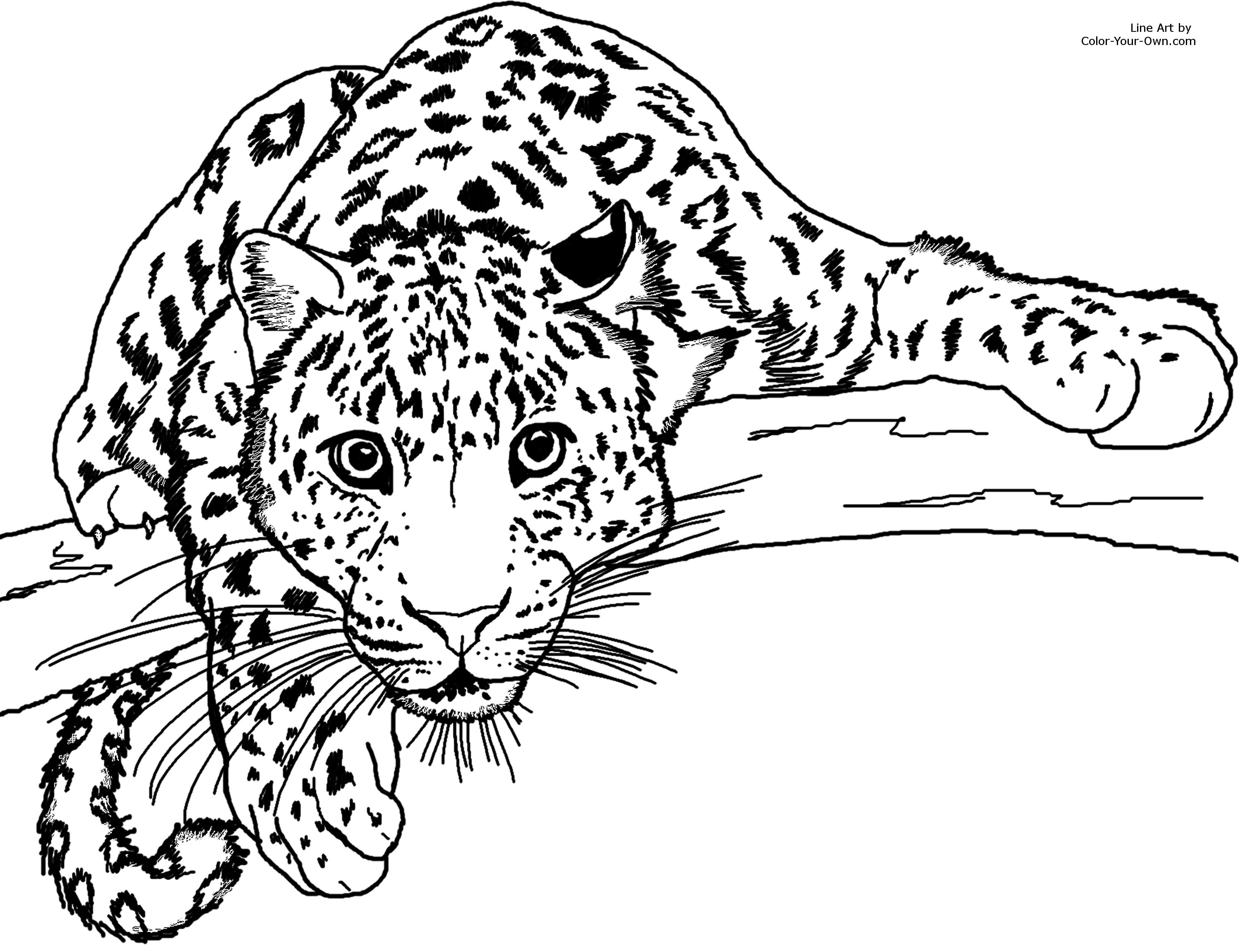 jaguar pictures to color jaguar coloring pages to download and print for free color pictures jaguar to
