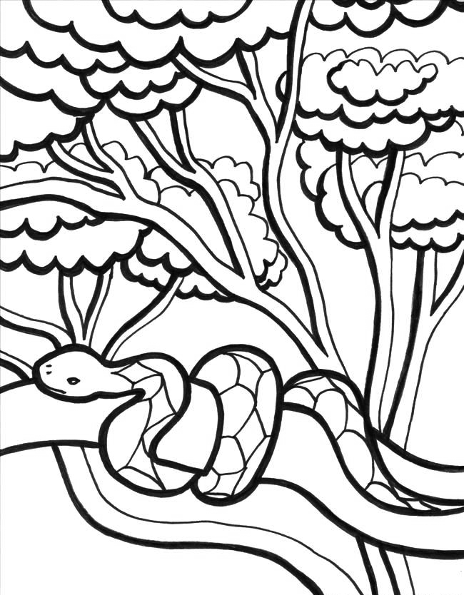 jungle coloring page jungle coloring pages to download and print for free page coloring jungle