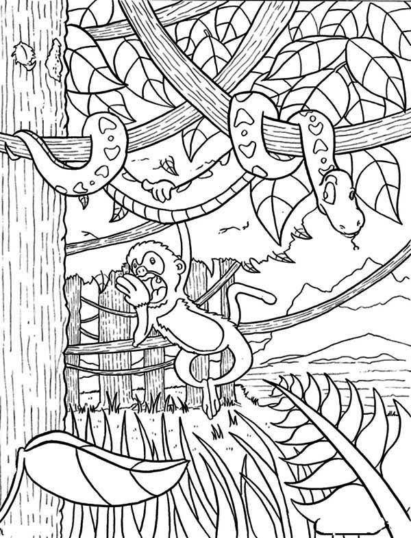 jungle coloring page jungle scenery drawing at getdrawings free download coloring jungle page