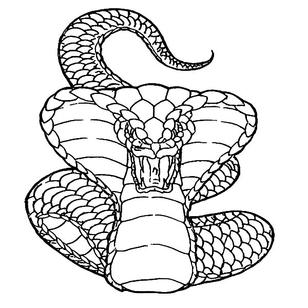 king snake coloring page king cobra snake coloring pages download and print for free snake page king coloring