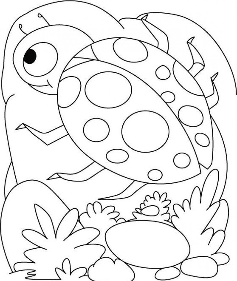 lady bugs coloring pages cute cartoon ladybug coloring page free printable pages bugs coloring lady