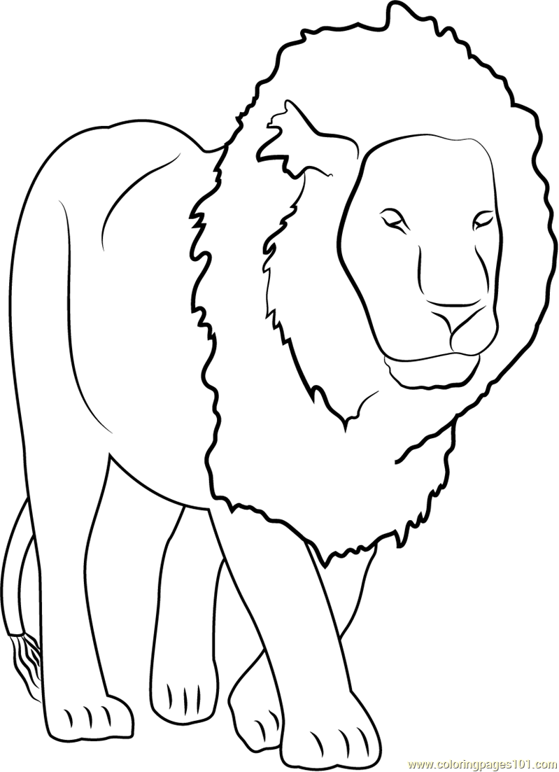 leo the lion coloring pages 157 best images about phi mu on pinterest a lion lion leo the lion coloring pages
