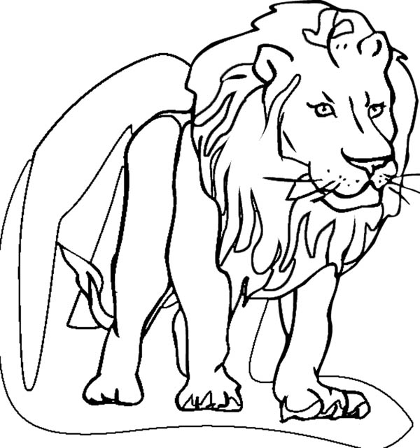 leo the lion coloring pages leo coloring page coloring pages coloring pages lion leo pages the coloring