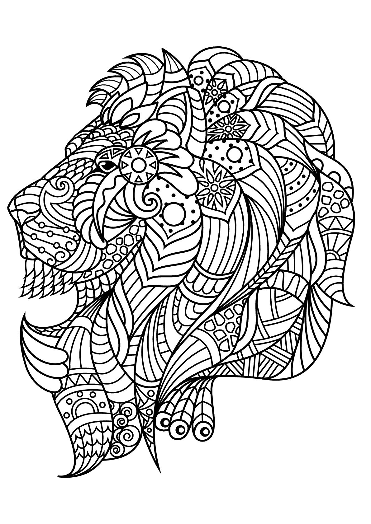 Lion coloring pictures