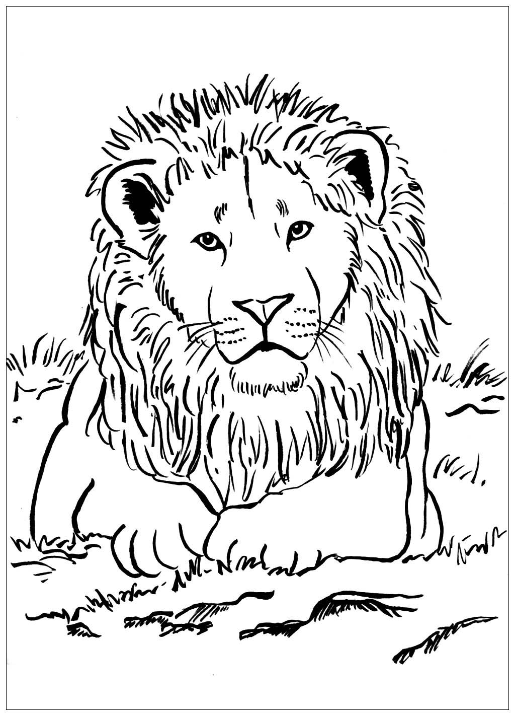 lion coloring pictures lion coloring pages clipart and other free printable coloring lion pictures