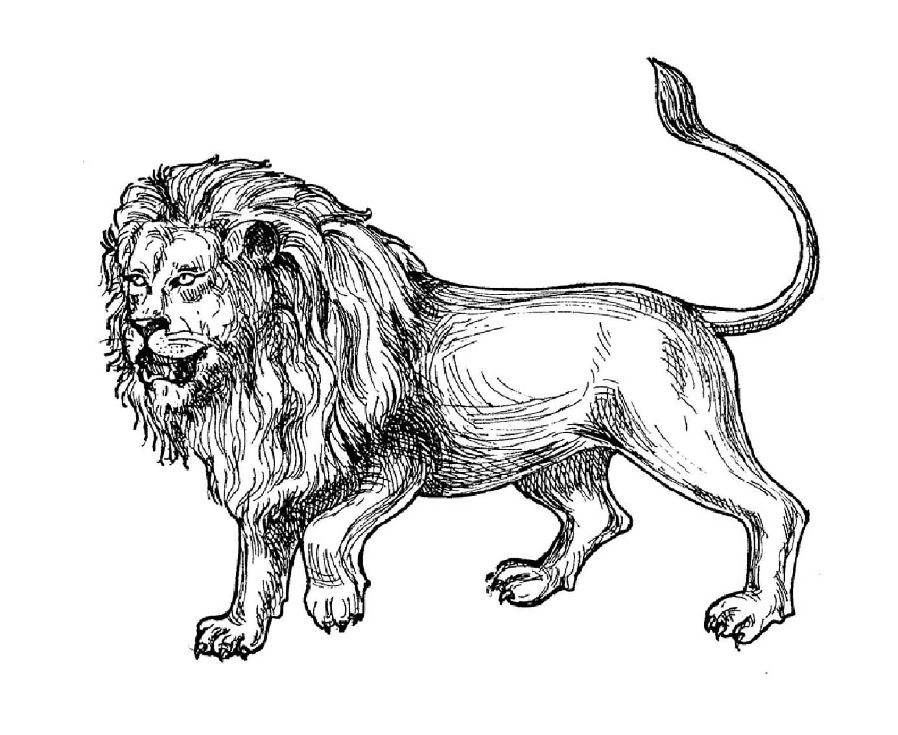 lion pictures to colour lion real animals coloring pages for kids printable free colour lion to pictures