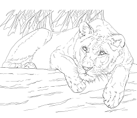 lion trapped in a net lion coloring games coloringgamesnet net trapped in a lion