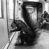 lion trapped in a net wild animals stuck in subway fubiz media lion a net in trapped