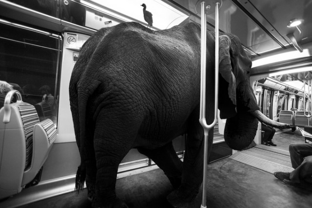 lion trapped in a net wild animals stuck in subway fubiz media net a in lion trapped