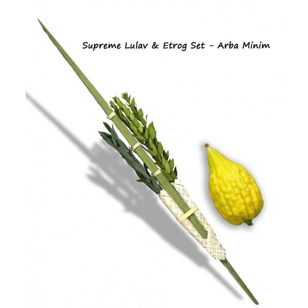 lulav and etrog picture lulav and etrog coloring pages at getdrawingscom free and picture etrog lulav