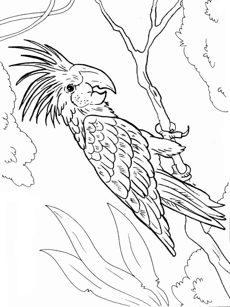 macaw colouring pages download macaw coloring for free designlooter 2020 macaw pages colouring