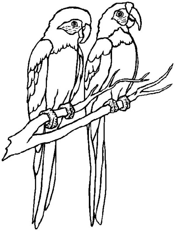 macaw colouring pages free macaw coloring page pages macaw colouring