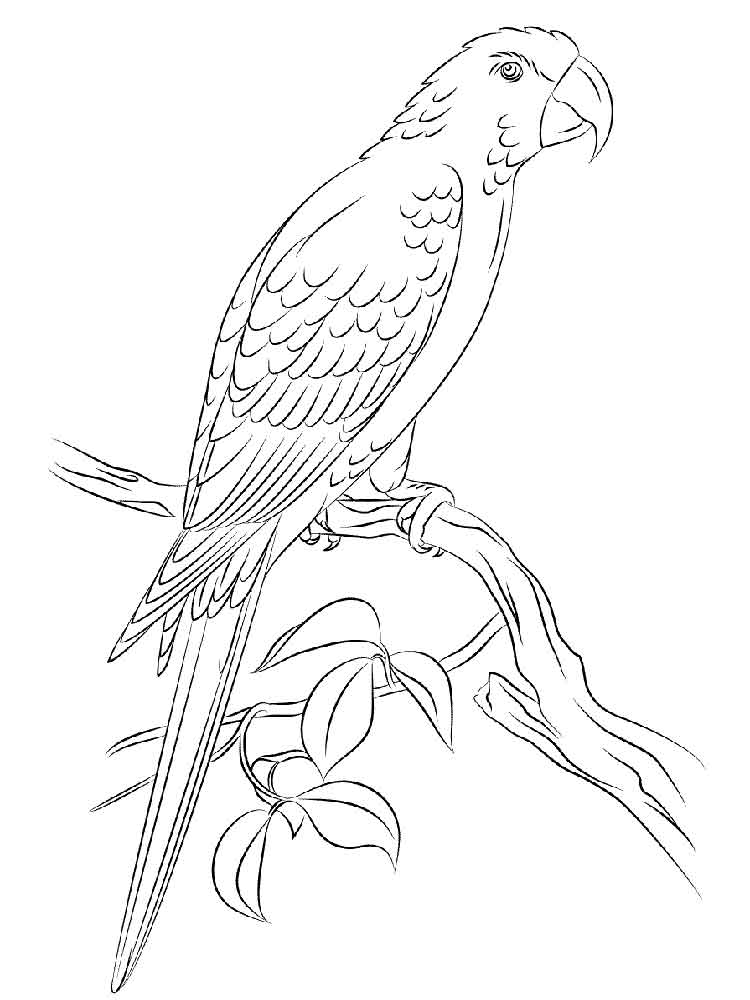 macaw colouring pages free parrot and macaw coloring pages colouring pages macaw
