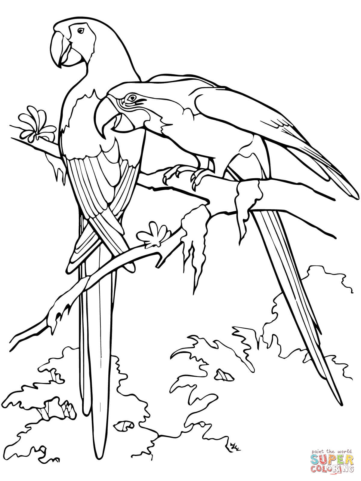macaw colouring pages free parrot and macaw coloring pages macaw pages colouring