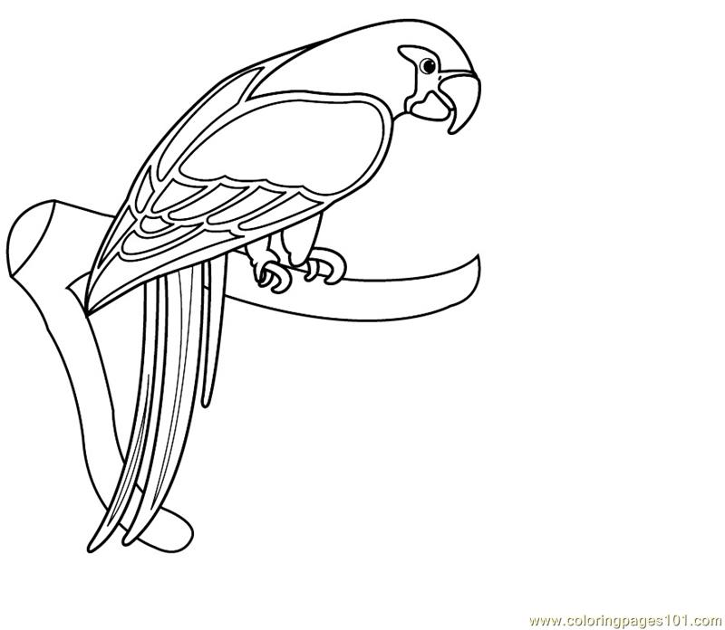 macaw colouring pages free parrot and macaw coloring pages pages colouring macaw