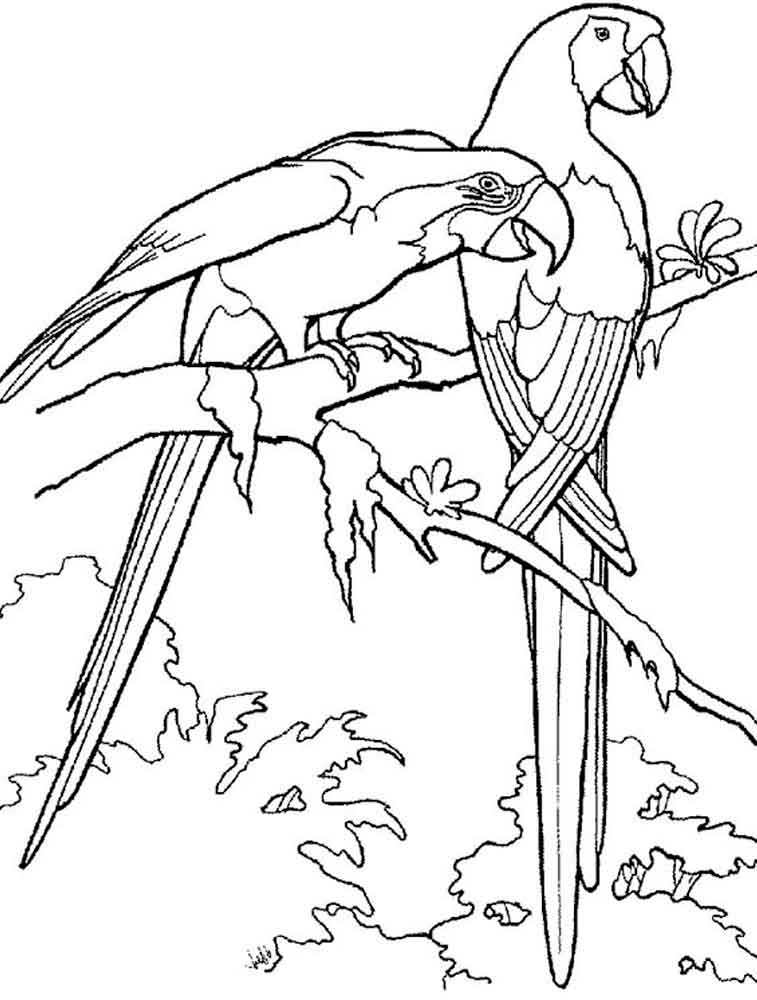 macaw colouring pages free parrot coloring pages for adults printable to macaw pages colouring