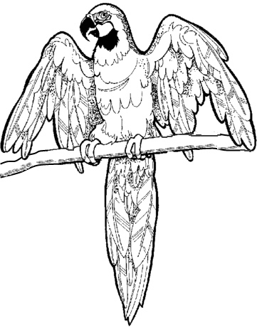 macaw colouring pages free printable parrot coloring pages for kids colouring macaw pages
