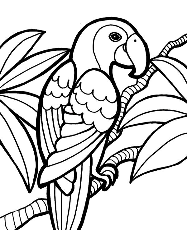 macaw colouring pages hyacinth macaw coloring page free printable coloring pages pages macaw colouring