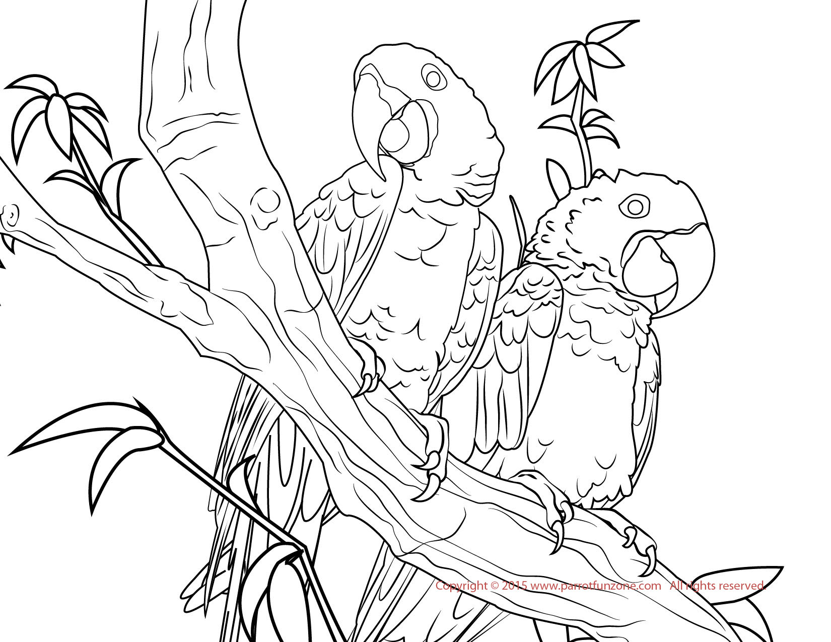 macaw colouring pages jungle coloring pages hubpages pages macaw colouring