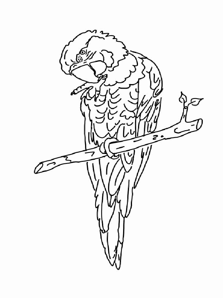 macaw colouring pages lovely parrot coloring page download print online colouring macaw pages