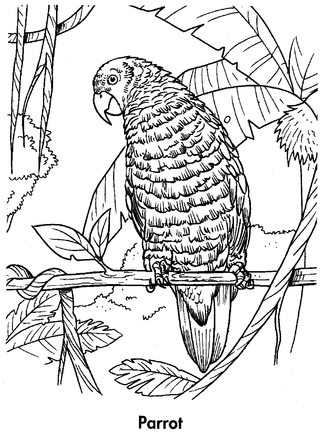 macaw colouring pages macaw coloring page download free macaw coloring page macaw pages colouring