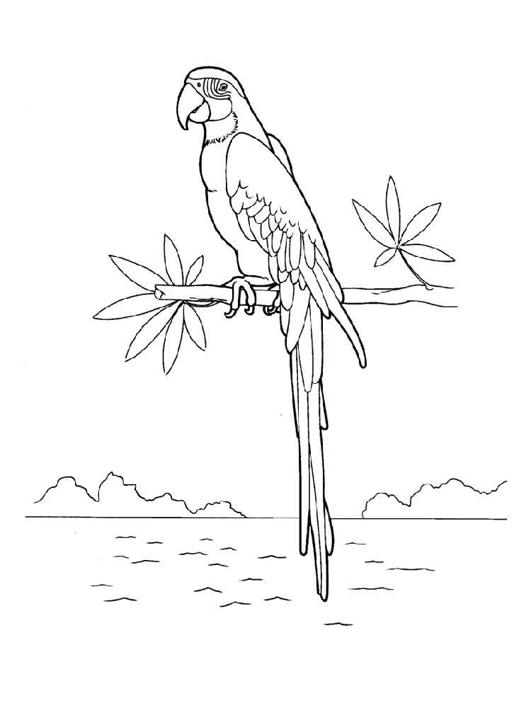 macaw colouring pages macaw coloring pages download and print macaw coloring pages colouring macaw pages