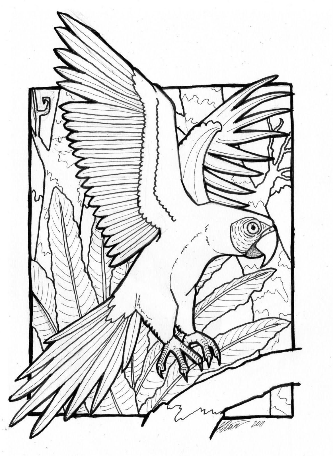 Macaw colouring pages