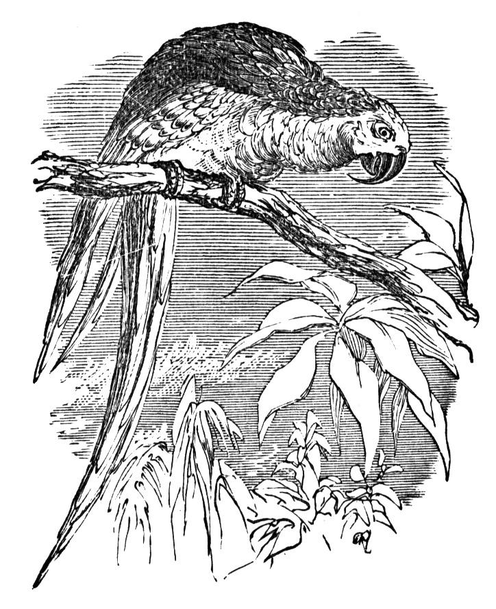 macaw colouring pages macaw coloring pages download and print macaw coloring pages pages macaw colouring 1 1
