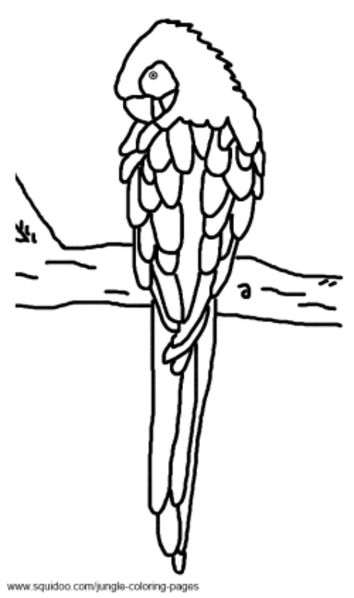 macaw colouring pages parrot coloring pages download and print parrot coloring macaw pages colouring