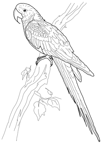 macaw colouring pages parrot couple coloring page download print online pages macaw colouring