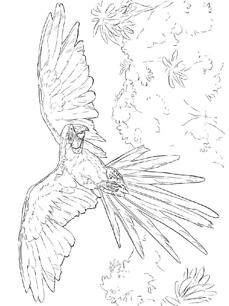 macaw colouring pages parrot on branch coloring page download print online macaw colouring pages
