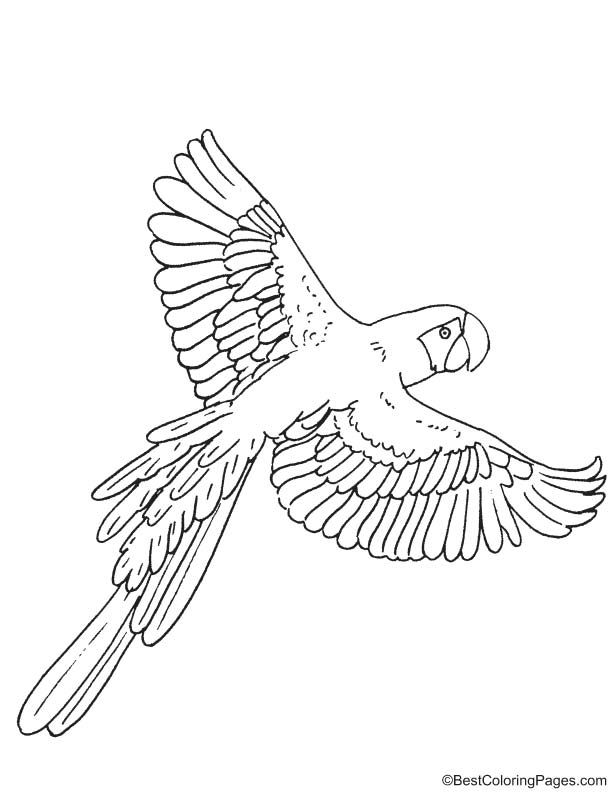 macaw colouring pages scarlet macaw coloring download scarlet macaw coloring macaw pages colouring