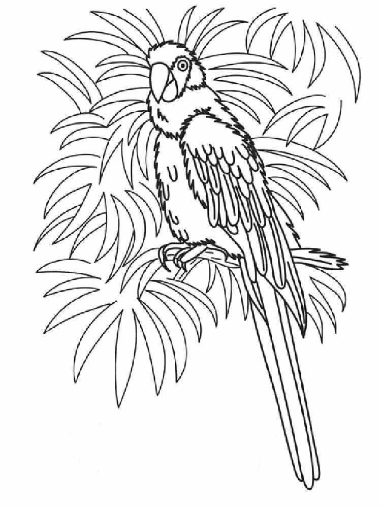 macaw colouring pages scarlet macaws coloring page free printable coloring pages pages colouring macaw