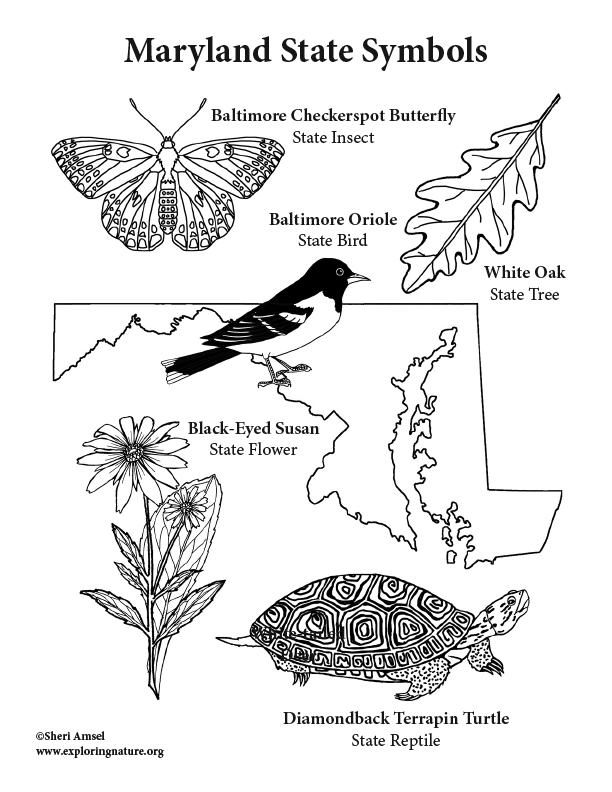 maryland coloring pages maryland coloring pages at getcoloringscom free pages maryland coloring