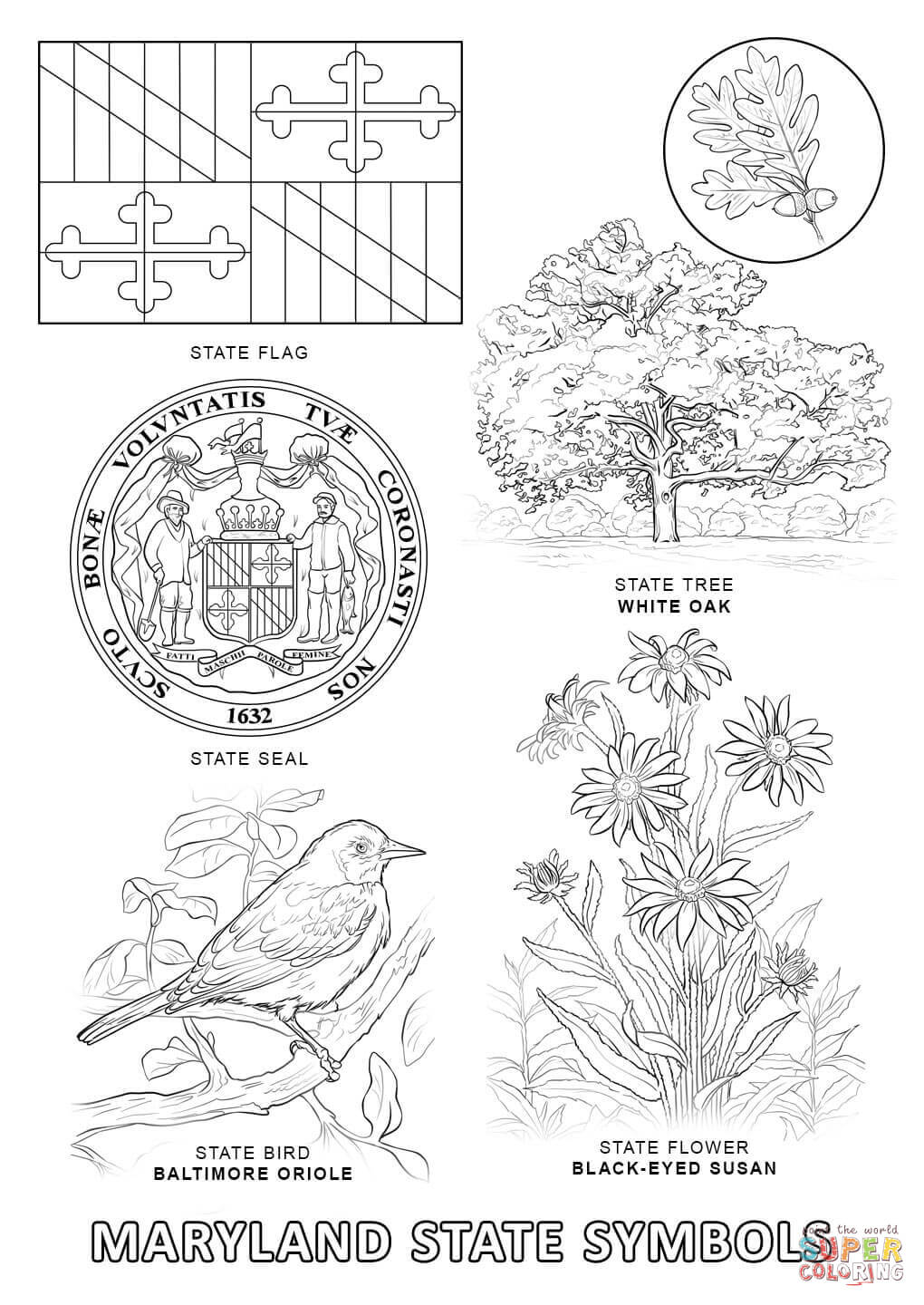 maryland coloring pages maryland state tree coloring page free printable pages maryland coloring