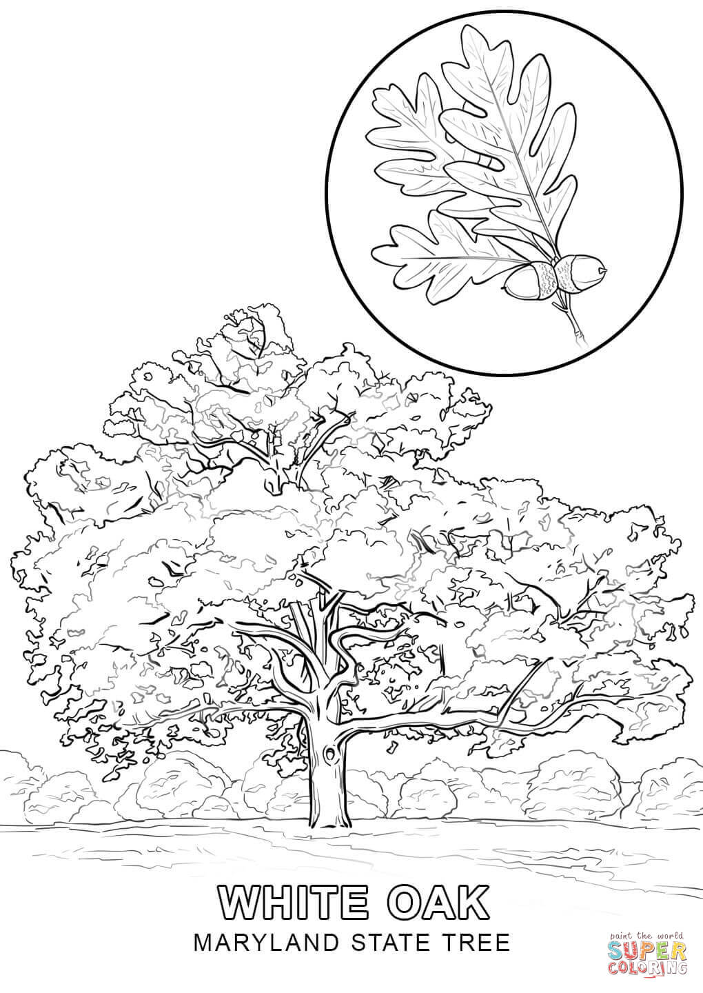 maryland coloring pages usa printables maryland state flag on pole state of coloring pages maryland