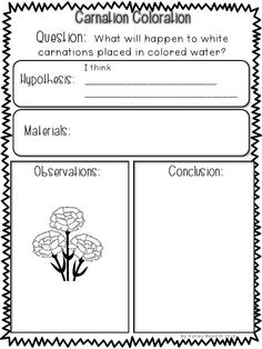 milk and food coloring experiment worksheet summer kindergarten worksheets kindergarten worksheets coloring worksheet milk and experiment food