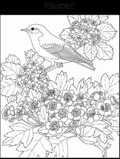 minnesota state bird minnesota state outline coloring page with images minnesota state bird