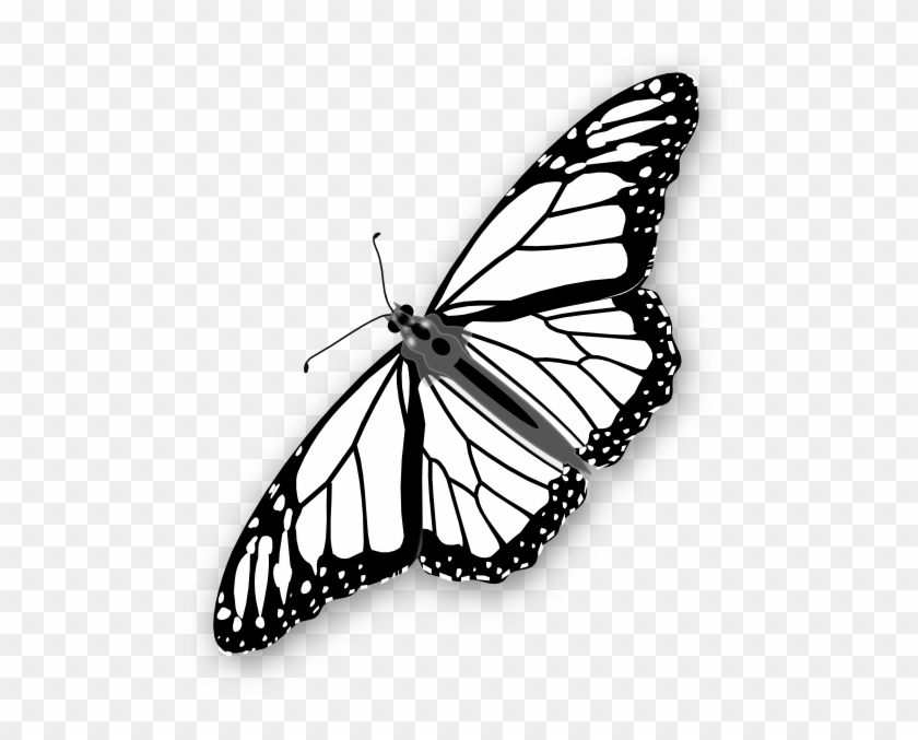 monarch butterfly outline clipart info monarch butterfly outline png free butterfly outline monarch