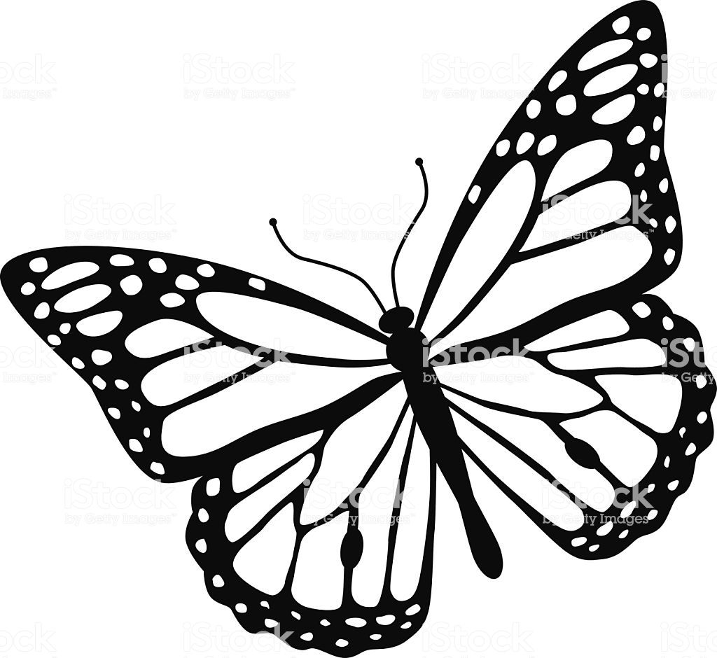 monarch butterfly outline monarch butterfly drawing black and white free download outline butterfly monarch