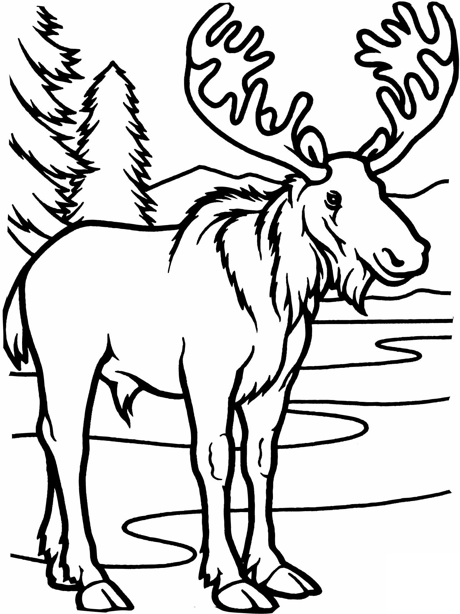 moose coloring free printable moose coloring pages for kids moose coloring