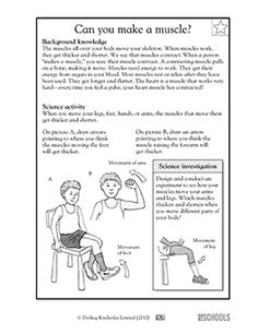 muscles worksheet for kids free download muscular system worksheet human body worksheet kids for muscles