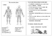 muscles worksheet for kids inside out anatomy muscles teaching biology science muscles worksheet for kids
