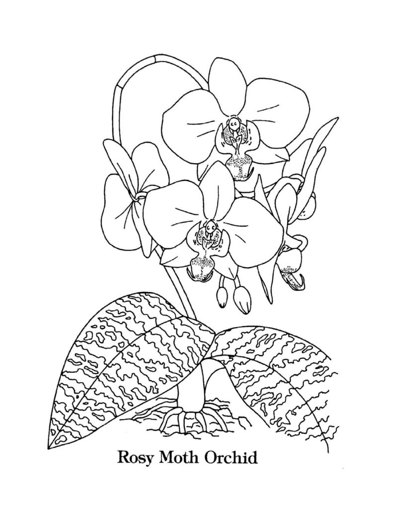national day coloring pages joyful celebration on national canada day coloring pages pages coloring national day